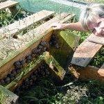 Success Stories – The British Snail Farmer