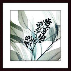 <li>Artist: Steven N. Meyers</li> <li>Title: Eucalyptus</li> <li>Product type: Framed print</li>