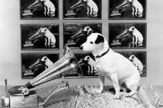 Nipper the dog listening to gramophone recording