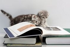 Kittens & books! Oh my!