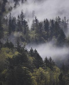 31 Neue Ideen Natur Wald Berge Nebel Kiefer - 31 New Ideas Nature Forest Mountains Mists Pine 31 Neue Ideen Natur Wald Berge Nebel Kiefer