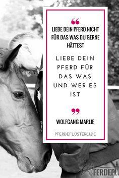 Liebe Dein Pferd für das was und wer es ist - Pferde Liebe und Vertrauen