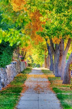 It's a beautiful world - feen-dos: Autumn Sidewalk, Helena, Montana Background Images For Editing, Studio Background Images, Photo Background Images, Photo Backgrounds, Blurred Background, Wallpaper Backgrounds, Wallpapers, Jardim Natural, Foto Nature