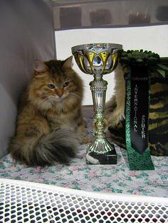 Kuva:siperiankissa , Amurin Faiga vuodelta 2009 ja valmistumis pokaali