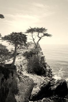Pebble Beach The lone cypress