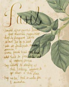 Grace Popp Herb Study I