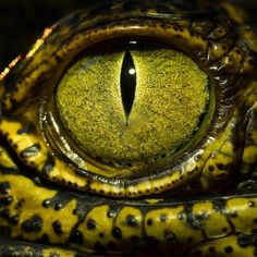 @robertclarkphoto  One of my favorite parts of doing this job is the diversity of stories that I get to work on. I'm in Cambodia on assignment for @natgeo on a forthcoming story  and while waiting for a few parts to come together I found a crocodile farm and was able to spend a little time doing some #macrophotography. by natgeo