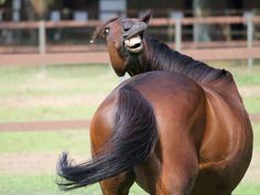 TOP 40 Inphotogenic Funny Animals