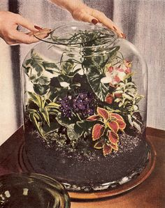Indoor Terrarium Picture Examples | ... Homes & Gardens House Plants New How-To for the Indoor Gardner 1959