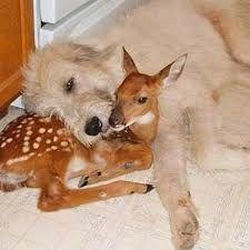 Resultado de imagem para baby dog