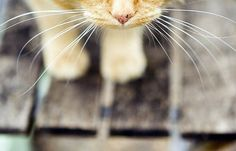 whiskers on kittens. Whiskers On Kittens, Cats And Kittens, Crazy Cat Lady, Crazy Cats, Paul Walker, I Love Cats, Cool Cats, Gatos Cats, Here Kitty Kitty
