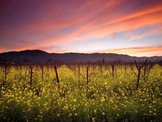 Napa Valley Vineyards, California