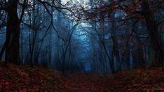 Autumn Forest Wallpaper Full HD.