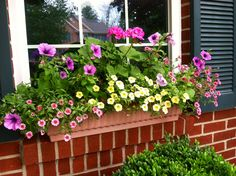 Window box in our front yard
