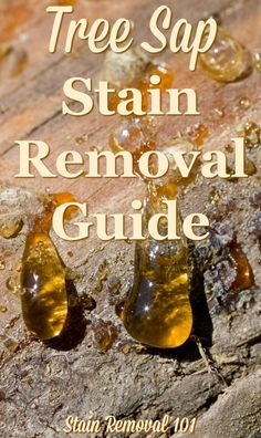 Tree sap stain removal guide, with step by step instructions, for clothing, upholstery, carpet, plus hard surfaces like your car {on Stain Removal 101}