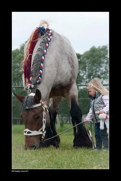 Looks like a Brabant. By Ton van der Weerden, Big Horses, Work Horses, Horses And Dogs, Horse Love, Animals And Pets, Cute Animals, All The Pretty Horses, Beautiful Horses, Animals Beautiful