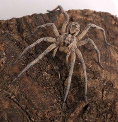 http://www.ueberschriftennews.blogspot.com/2012/09/drratschlag-und-sie-reflektieren-wieder.html  Wolf spider