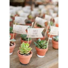Wedding Gifts For Guests succulent wedding favor escort cards - We've found 20 fun ideas for easy, last-minute wedding favors to help save your sanity. Vintage Wedding Favors, Wedding Gifts For Guests, Unique Wedding Favors, Wedding Ideas, Trendy Wedding, Inexpensive Wedding Favors, Nautical Wedding, Wedding Themes, Wedding Decorations