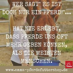 Emma Care Pferdefuttershop - New Ideas Horse Girl, Horse Love, Pretty Horses, Beautiful Horses, Christmas Horses, Horse And Human, Equestrian Problems, Horse Quotes, Feeling Special