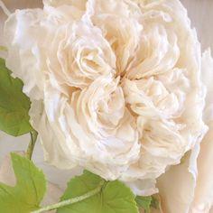 Maggie Austin sugar soft & fluffy garden rose #maggieaustincakes