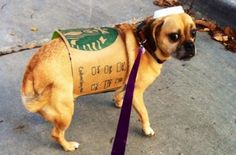 Doggy named pumpkin becomes a starbucks spiced latte addicted adorable diy halloween costumes for pets solutioingenieria Image collections