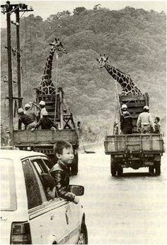 [台北事]關於台北的曾經: 從圓山到木柵—台北市立動物園的變遷