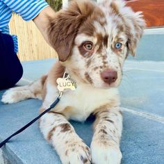 pretty dogs information are readily available on our internet site. Super Cute Puppies, Cute Dogs And Puppies, Baby Dogs, Doggies, Adorable Dogs, Best Puppies, Baby Animals Pictures, Cute Animal Pictures, Gif Pictures