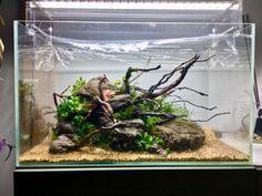 Still missing the background plants though Diskus Aquarium, Aquarium Design, Shrimp Tank, Hello To Myself, Source Of Inspiration, State Art, Ikebana, Animals And Pets, Fresh Water