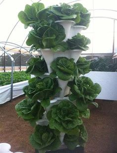 Vegetable Gardening For Beginners Vertical Vegetable Gardening - Vertical Vegetable Gardening Ideas. Vertical produce gardening relies on minimal space to maximize production of fresh fruits and vegetables from the comfort of your windowsill or balcony. Vertical Hydroponics, Hydroponic Farming, Hydroponic Growing, Aquaponics System, Diy Hydroponics, Growing Plants, Vertical Vegetable Gardens, Indoor Vegetable Gardening, Gardening Tips