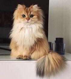 cat   kitty   cute