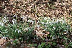 Frühling #frühling #aerze #hedyundolaf