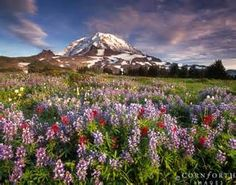 mount rainier national park Wildflowers - Bing images