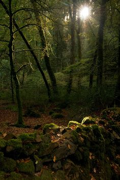 . Cottage In The Woods, Wood Cottage, Lost In The Woods, Tree Forest, Woodland, Nature, Garden Design, Trail, Sunrise