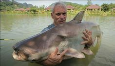 Jeremy Wade and a Mekong catfish Jeremy Wade, John Wade, Fishing Times, Gone Fishing, Scary Fish, Big Catfish, River Monsters, Sea Monsters, Pisces
