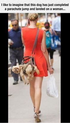 I Like To Imagine... funny dogs people jokes puppy pets funny sayings humor omg funny pictures weird people wtf funny animals funny images