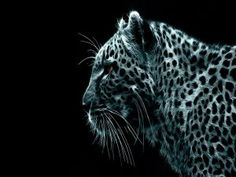 Leopardo digital