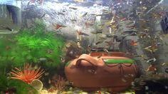 1 million guppies fish in aquarium tank