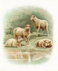 Free Vintage Image ~ Sheep at the Farm