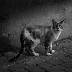 Concours Photo la rue est nous Festival Résistances Concours Photo, Photos, Cats, Animals, Pictures, Gatos, Animales, Kitty Cats, Animaux