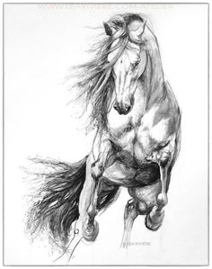 Drawing by Léa Rivière - Léa Rivière's drawing © Léa Rivière any reproduction in part or in total prohibited / - Rolando Saldaño Horse Pencil Drawing, Horse Drawings, Animal Drawings, Pencil Drawings, Art Drawings, Painted Horses, Horse Sketch, Equine Art, Pretty Horses