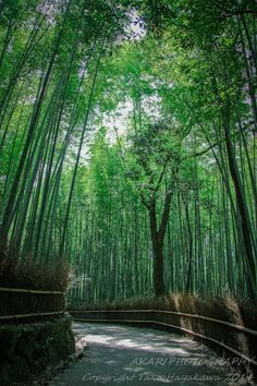 Nature Landscape Photography  Japan Bamboo by AkariPhotography, $20.00
