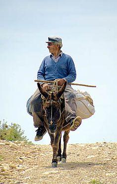 Donkey In Greece People Around The World, Around The Worlds, Myconos, Albania, Go Greek, Greek Isles, Corfu, Greece Travel, Beautiful Islands