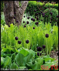 For side shade garden Back Gardens, Small Gardens, Outdoor Gardens, Shade Garden, Garden Plants, Woodland Garden, Shade Plants, Plant Design, Spring Garden