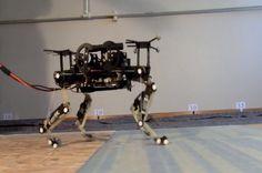 Cheetah-Cub Quadruped Robot Learns to Walk, Trot Using Gait Patterns from Real Animal - IEEE Spectrum Robot Videos, Learn Robotics, Real Robots, Cheetah Cubs, Humanoid Robot, Motion Capture, Robot Design, Darwin, Motor Skills