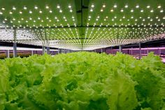 Can food grown in water be organic?