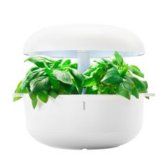 Smart Garden - growing herbs indoors without soil