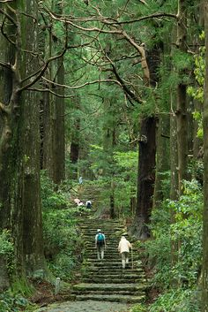 Steps to the sacred shrine ~ Kumano Kodo(series of ancient pilgrimage routes) , Wakayama, Japan Wakayama, The Places Youll Go, Places To See, Culture Art, Grand Tour, Pilgrimage, Japan Travel, Asia Travel, Historical Sites