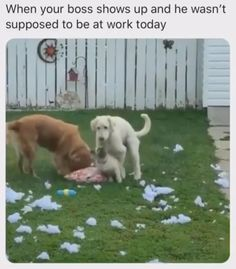 Funny Dog Videos, Funny Video Memes, Really Funny Memes, Stupid Funny Memes, Funny Relatable Memes, Funny Dogs, Animal Jokes, Funny Animal Memes, Cute Funny Animals