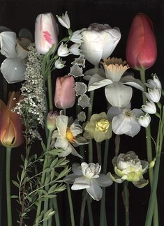 ~ Craig Cramer, via his Ellis Hollow blog - Scan of daffodils, Leucojum and tulips the deer missed