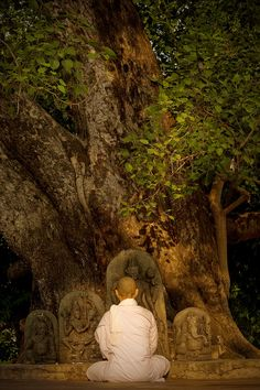 What happens in a Guru's presence? You become more alive. Every cell in your body becomes more alive. Guru invokes and awakes the intelligence, not just the intellect. The pinnacle of intellect is intelligence.